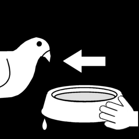 give water to the pigeon