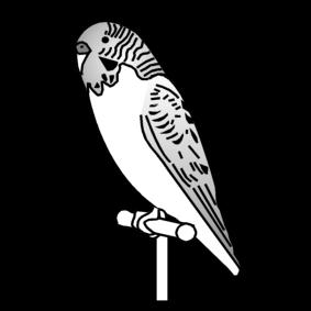 budgie / grass parakeet