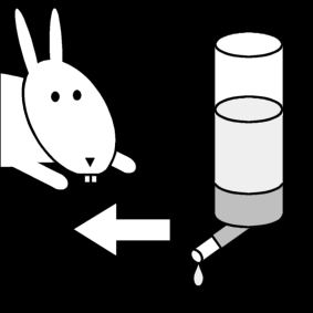 give water to the rabbit